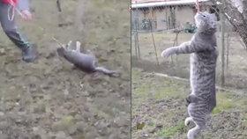 Šokující video: Školák vlekl kočku na vodítku jako kus hadru, pak ji pověsil na strom