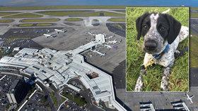 Mluvčí letiště v Praze ke kauze zastřeleného štěněte: Postupovali bychom stejně