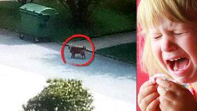 Dolním Žandovem běhá neočkovaný pes a napadá lidi! Pokousal čtyřleté dítě, majiteli je to jedno!