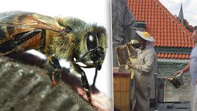 Úly plné včel na střechách v Praze po zimě ožívají: Kde letos sklidí nejvíce medu?