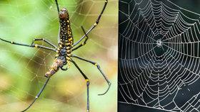 V Mexiku objevili nový druh obřího pavouka, měří 23 centimetrů