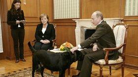 Putin se sejde s Merkelovou, vytáhne opět černého psa? Volat mu bude Trump