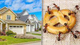 S jarem přichází i nevítaná návštěva: Podívejte se, jak vyhnat mravence z domu!