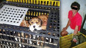 Český veterinář zadržený v Německu za pašování štěňat: Na internetu prodává nemocná zvířata