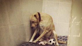 """""""Nejsmutnější pes světa"""" už potřetí hledá nový domov. Jinak ho utratí"""