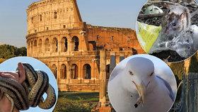 Italský Řím v obležení: Útočí na něj armáda divočáků, racků a hadů!