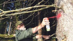 České lesy jsou ve špatné kondici. Uškodilo jim sucho i špatné zacházení