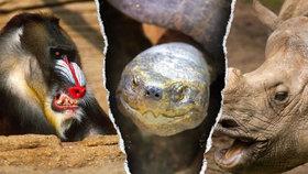 Srážka s nosorožcem, rozjetá želva: I tahle zranění Čechů platí pojišťovny