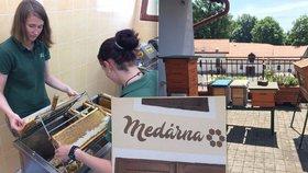Renesance včelařství v Praze: Lesy otevřely medárnu, mají i mednou krávu