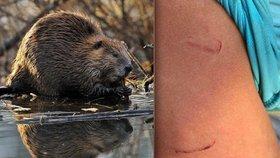Agresivní bobr se vrhl na osmiletého chlapce: Švýcaři se bojí chodit k řece