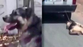 Tyran (66) vlekl za autem psa: Řidič na něj zavolal policii