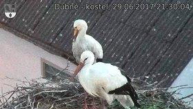 Čapí hnízdo v Dubném osiřelo: Přívalové deště v noci na pátek zabily už sedmé mládě