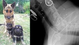Policajt mi bezdůvodně zabil psa, tvrdí Denisa. Střílel z auta v obydlené oblasti