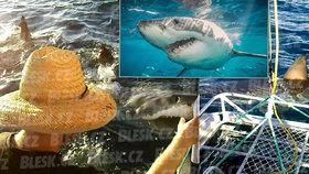 Českou turistku Malvínu (38) ohrožoval čtyřmetrový žralok: Hryzal do lodi!