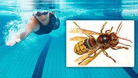 Plavkyni (18) při závodech bodla vosa: Zkolabovala a sjela pod hladinu!