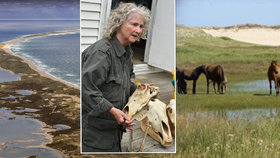 Žena (67) žije přes 40 let na opuštěném ostrově: Společnost jí dělají divocí koně