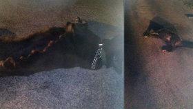 Srazil psa a nechal ho umírat na silnici: Po krutém řidiči pátrá internet