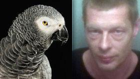 Papoušek napadl a usvědčil kriminálníka, který vyloupil domov jeho majitelů