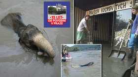 Tragické výročí Zoo Praha: Povodně v roce 2002 nepřežilo 134 zvířat