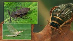 Víte, kdo žije kolem řek a rybníků? Poznejte tajemný svět hmyzu!