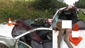 Brutální srážka s laní na Prachaticku: Řidič má těžká zranění, auto je na odpis
