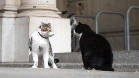 Napětí mezi britskými politiky: Účty si mezi sebou vyřizují už i jejich kočky