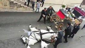 Kůň zkolaboval kvůli neúnosnému horku. Táhl svatební kočár s nevěstou i ženichem