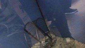 Šokující foto z pražského PetCentera: V teráriu bez vody a žrádla nechali pojít pět myšek
