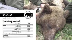 Chcete si zastřelit medvěda? Na Slovensku to jde jednoduše, jen zaplatíte až stovky tisíc korun