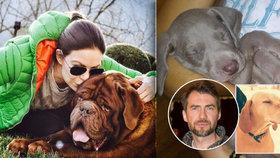 Trápení vystřídala radost: Pes Anny K. začal jíst a Slezáček si pořídil štěně