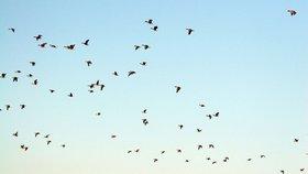 Ptáci odlétají do teplých krajin: Které druhy nás opouští?