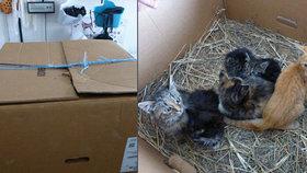 Koťata někdo vyhodil v zavázané krabici u supermarketu v Děčíně: H*vado! vzkazují mu místní