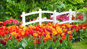 Nejvyšší čas vysadit tulipány, na jaře rozzáří celou zahradu