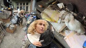 Množitelka a tyranka psů z Kojetína hledá nový pronájem: Chce zase podnikat i přes zákaz chovu!