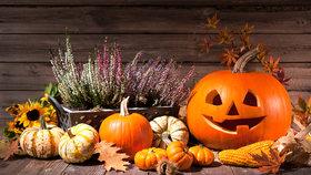 Halloweenská výzdoba, kterou zvládnete vy i vaše děti! Dýně, netopýři a další dekorace