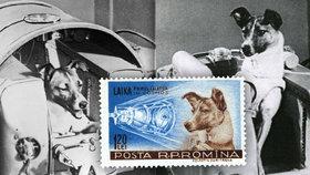 Pravda o Lajce, kterou Rusové vypustili do vesmíru: O její smrti lhali půl století!