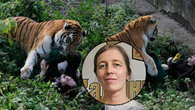 Tvář šelmou rozsápané Naděždy: Toto je ošetřovatelka, kterou v zoo potrhal tygr