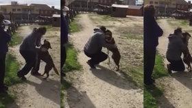 Úžasné video: Pes svého pána neviděl tři roky, neuvěříte, co vyváděl!