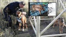 Psi uvázaní na opuštěném místě čekali na smrt: Lidé vypátrali majitele na Facebooku