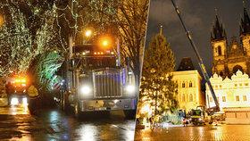 """Na Staromáku """"vyrostl"""" vánoční strom pro Prahu: Podívejte se, jak proběhlo jeho usazení"""
