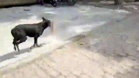 Brutální foto! Toulavá fena ukradla z nemocnice dítě: Nakrmila jím svá štěňata