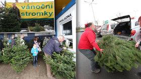 Fronta na jedle v Ikee a dražší smrk nebo borovice: Kolik stojí vánoční stromky?