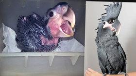 To je ale krasavec: Vzácný papoušek na pražském Šeberově. Těší mě, jmenuju se Max!