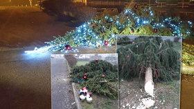 Na Ústecku neznámý vandal pokácel pětimetrový vánoční stromeček: Pátrá po něm policie