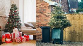 Čas vánočních stromečků je pomalu u konce: Jak se pichláče snadno zbavit?