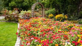 V srpnu je na zahradě spousta práce. Můžete třeba dělit trvalky a zakládat nové záhony.