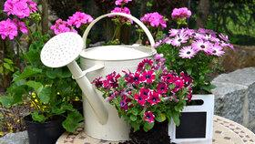 Vzrostlé sazenice květin koupíte na jaře za dvacet až třicet korun. Když si je teď začnete pěstovat na okně, vyjdou vás podstatně levněji.