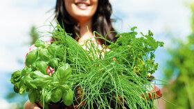 8chyb připěstování bylinek: Letos vám konečně porostou