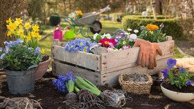 Co dát před zmrzlými do květináčů? Víme, které květiny mráz nespálí!