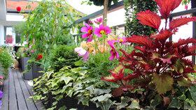 Základem úspěšného pěstování květin na balkoně je vybrat správné rostliny.